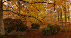 Forêt en automne Images libres de droits