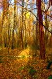 Forêt en automne images stock