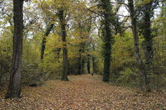 Forêt en automne image stock