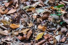 Forêt en automne avec des feuilles tombées au sol Images libres de droits