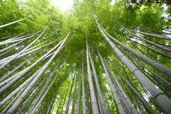 Forêt en bambou à Kyoto photo stock