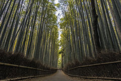 Forêt en bambou à Kyoto, Japon Photos stock