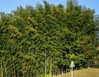 Forêt en bambou à Kyoto, Japon photos stock