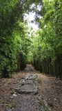 Forêt en bambou à la traînée de Pipiwai Photo stock
