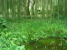 Forêt en bambou Images stock