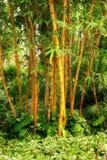 Forêt en bambou Photo libre de droits