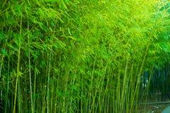 Forêt en bambou Image stock