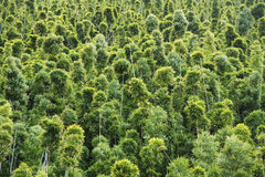 Forêt en bambou Photographie stock libre de droits