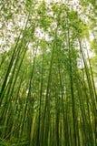 forêt en bambou Images libres de droits