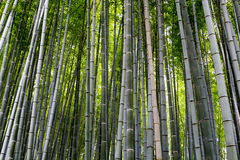 Forêt en bambou, Arashiyama, Japon Photo stock