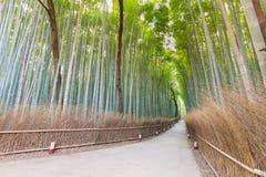 Forêt en bambou d'Arashiyama avec la manière de marche l Image stock