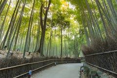 Forêt en bambou d'Arashiyama avec la manière de marche menant à la jungle, Kyoto Japon Photo libre de droits