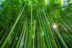 Forêt en bambou dans Anduze, France image stock