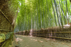 Forêt en bambou dans Arashiyama, Kyoto Japon Photos libres de droits