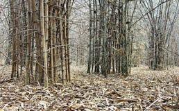 Forêt en bambou en été Image libre de droits