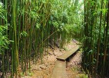 Forêt en bambou, Maui, Hawaï images stock