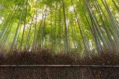 Forêt en bambou, verger en bambou Image libre de droits