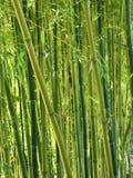 Forêt en bambou verte Photos libres de droits