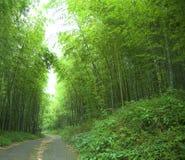 Forêt en bambou verte photographie stock libre de droits