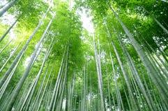 Forêt en bambou verte Image stock