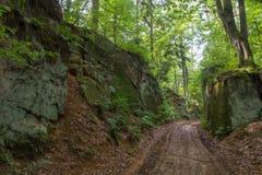 Forêt en Bavière Photos libres de droits