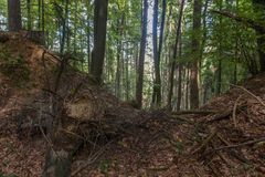 Forêt en Bavière Images stock