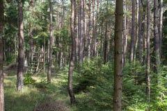 Forêt en Bavière Image libre de droits