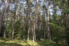Forêt en Bavière Photographie stock libre de droits