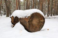 Forêt en bois d'hiver d'identifiez-vous photo libre de droits