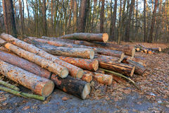 Forêt en bois d'identifiez-vous photos stock