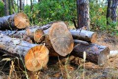 Forêt en bois d'identifiez-vous de pin photos stock