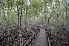 Forêt en bois de pont et de palétuvier dans Pranburi, Prachuab Khiri Khan Images libres de droits