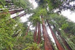 Forêt en bois rouge Image libre de droits