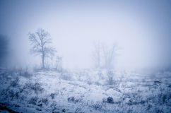 Forêt en brouillard photos libres de droits