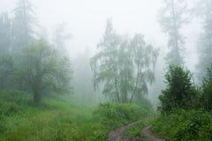Forêt en brouillard Photos stock