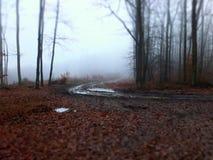 Forêt en brouillard Images libres de droits
