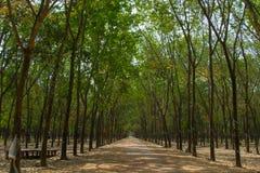 Forêt en caoutchouc Images stock