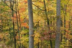 Forêt en feu avec la couleur. Photos stock