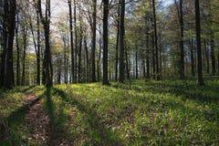 Forêt en fonction profondément à un. Photographie stock