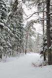 Forêt en hiver Images libres de droits