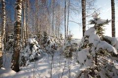 Forêt en hiver Image libre de droits