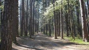 Forêt en montagne de Vitosha, Bulgarie L'amour de la nature et de sa conservation est amène un type d'un petit Photos libres de droits