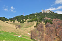 Forêt en montagnes de Ciucas Image stock