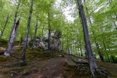 Forêt en parc de Polyanitsky Photo libre de droits