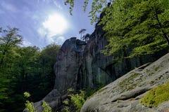 Forêt en parc de Polyanitsky Photographie stock