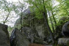 Forêt en parc de Polyanitsky Photos stock