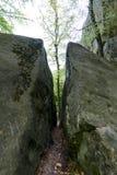 Forêt en parc de Polyanitsky Photographie stock libre de droits