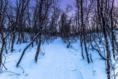 Forêt en parc national d'Abisko, Suède Photo libre de droits