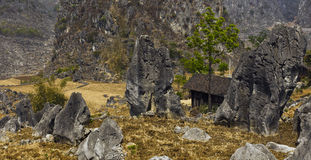 Forêt en pierre Photos stock