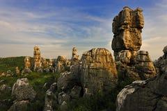 Forêt en pierre Image libre de droits